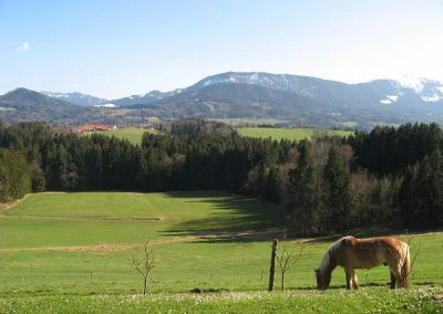 Traumhafter Bergblick auf dem Bauniglerhof