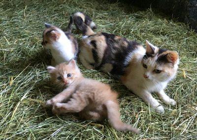 Kätzchen auf dem Bauniglerhof