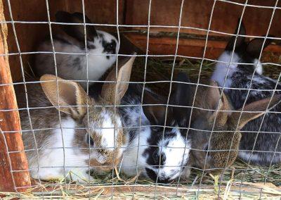 Tiere auf dem Bauniglerhof